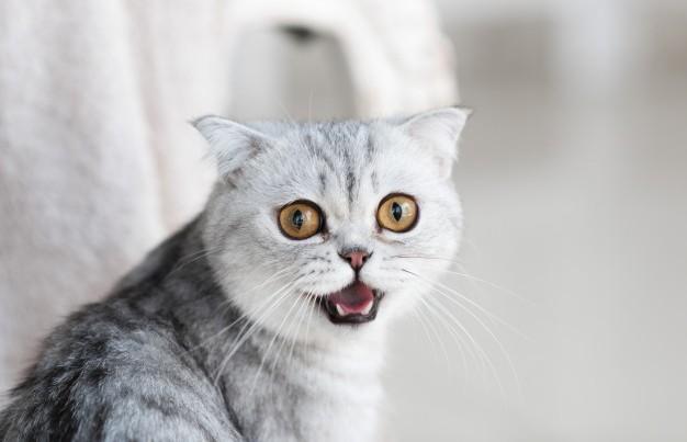 Испугавшийся тостера кот рассмешил Сеть