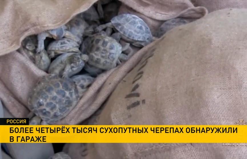 Необычная контрабанда в Оренбурге: почти 4000 ценных черепах вывезли из Казахстана и держали в гараже