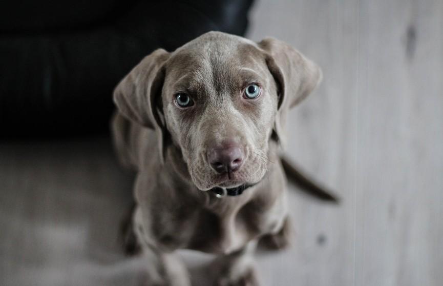 Собака сама выбрала новую хозяйку и запрыгнула к ней в машину – теперь пес счастлив! (ВИДЕО)