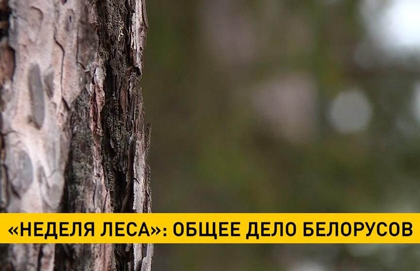 Депутаты Палаты представителей присоединились к акции «Неделя леса»