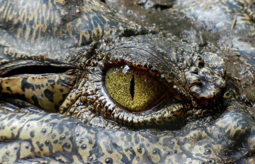 Крокодил заживо съел рыбака на глазах у его жены
