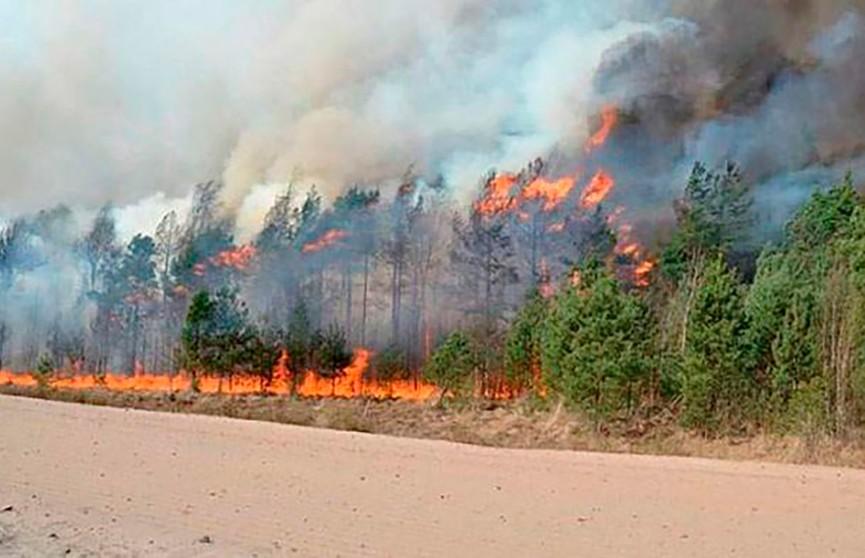 Пожароопасная ситуация в Беларуси. Любой окурок может привести к бедствию