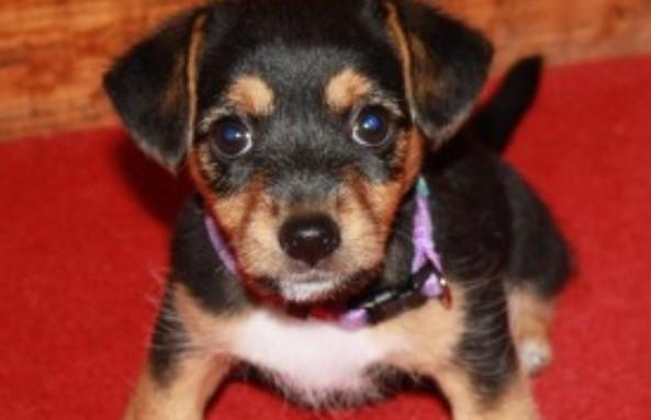 Семья нашла свою собаку, которая исчезла 11 лет назад – но песик очень изменился. Посмотрите, это невероятно трогательно!