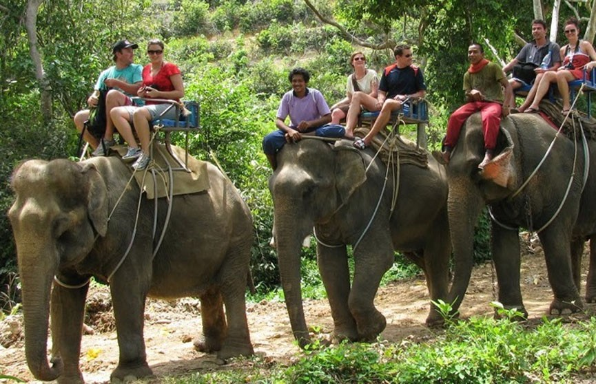 Слона, катавшего туристов, довели до смерти от усталости