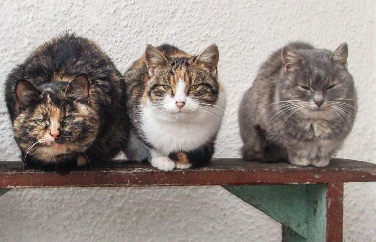 В Барановичах откроют приют для бездомных животных.