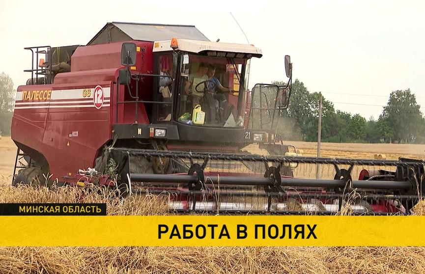 Уборочная-2020: Минская область – одна из лидирующих по вкладу в общий урожай