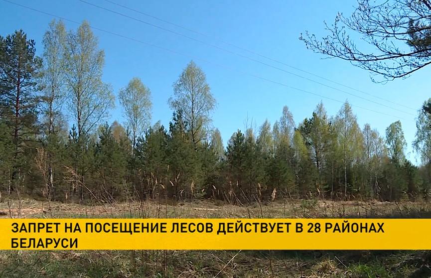 Запрет на посещение лесов действует в 28 районах Беларуси