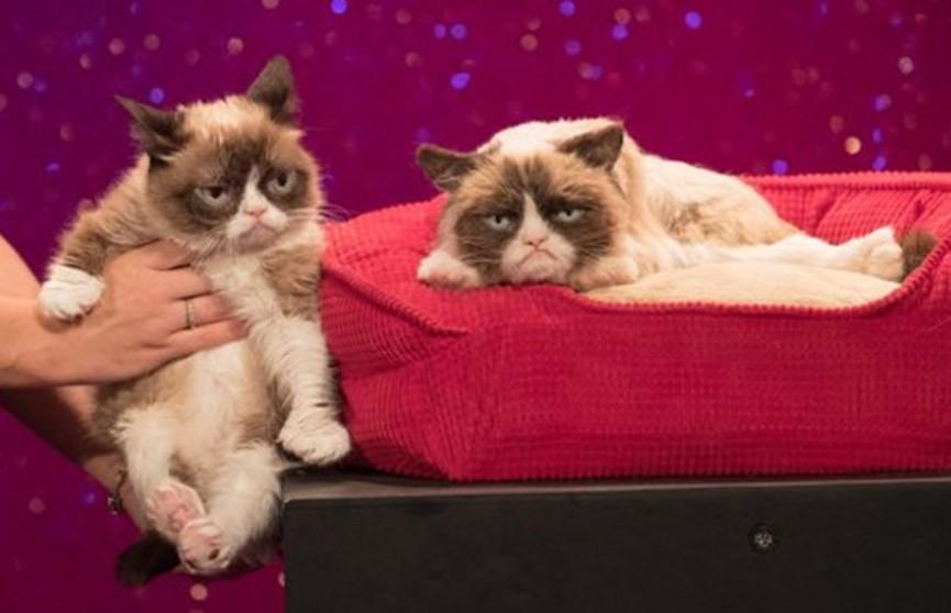 Фильм из вирусных видео про кошек выходит в США