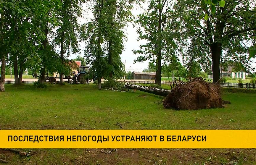 В Витебской области продолжают устранять последствия урагана