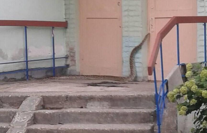 В детском саду в Минске поймали четырёхметрового питона