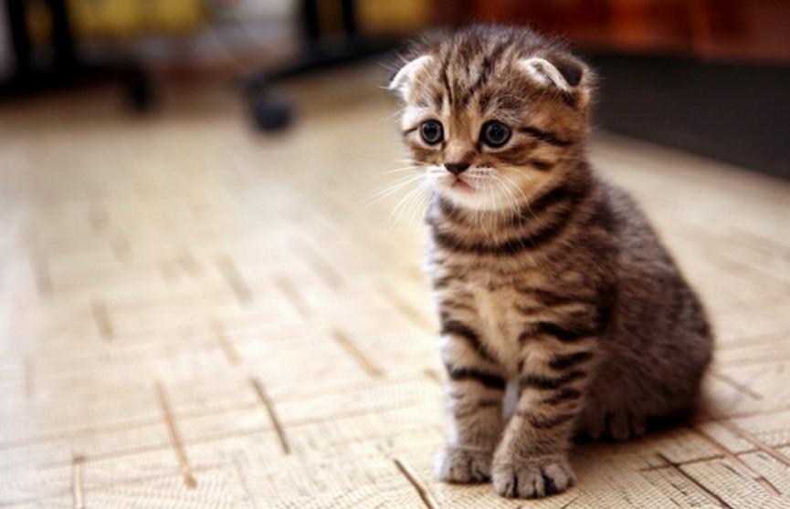У двух белорусов в Германии конфисковали кошку и 17 котят