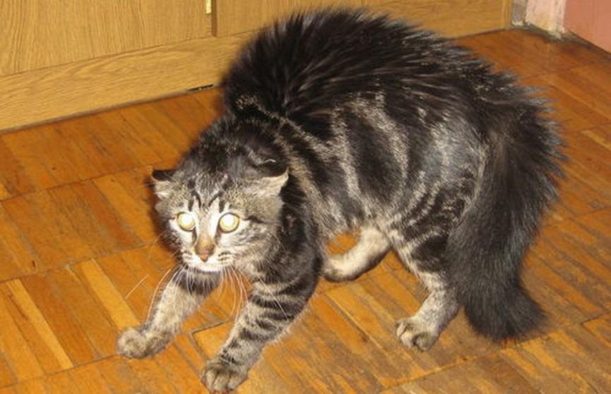 Бешеные коты покусали четырёх человек в Барановичах