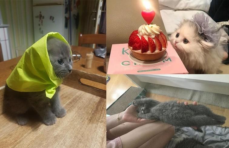Ничего милее вы сегодня не увидите: 10 котят, в которых можно влюбиться с первого взгляда