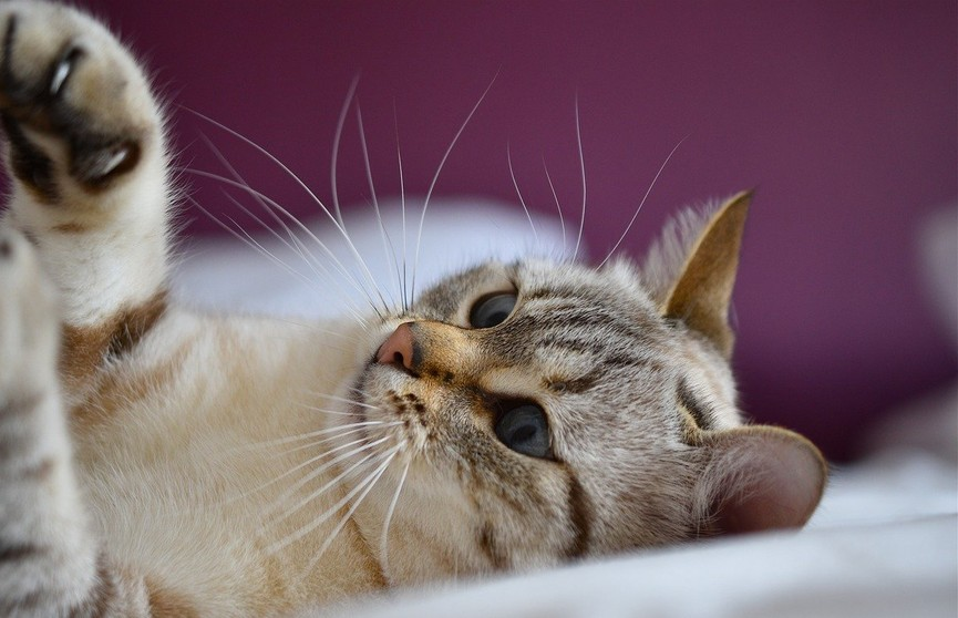 Посмотрите, как кот пытается споймать солнечного зайчика и хочет залезть на потолок! 100% будете смеяться! (ВИДЕО)