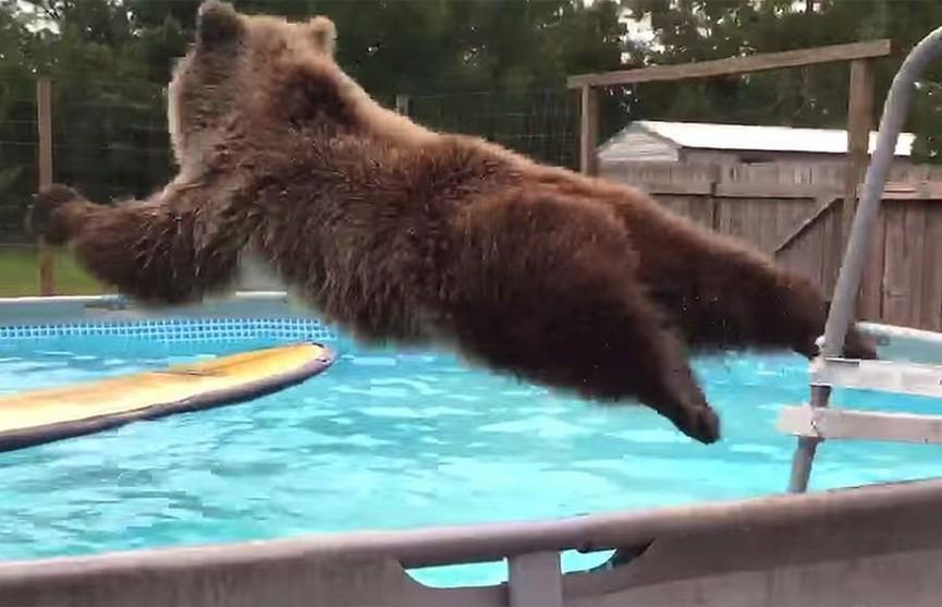 В Лос-Анджелесе медведь устроил вечеринку у бассейна