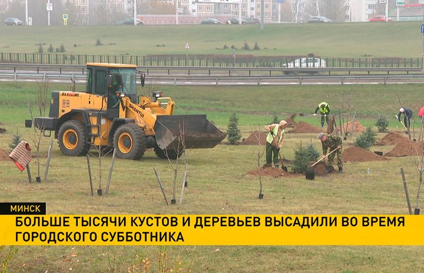 Больше тысячи кустов и деревьев высадили во время городского субботника в Минске