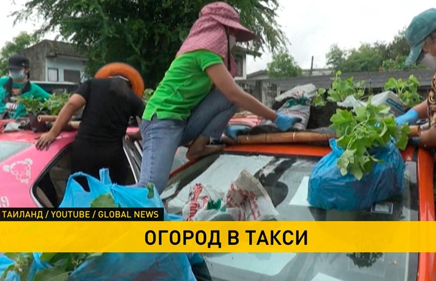 В Таиланде таксисты остались без работы: теперь они выращивают овощи прямо на парковке