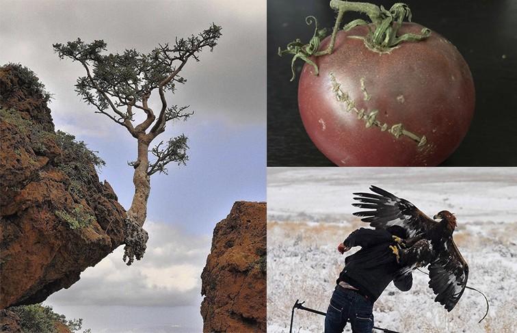 Нарочно не придумаешь! 10 фото природы, которые вы никогда не забудете