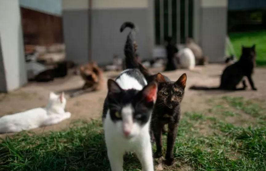 Испанец «случайно» завел в своей квартире 110 кошек