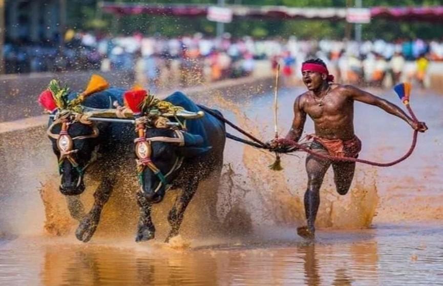 Индийский бегун побил рекорд Усэйна Болта во время гонки с буйволами