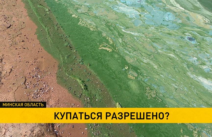 Странный цвет и неприятный запах: берега Минского моря покрылись слизью. Опасно ли купаться?