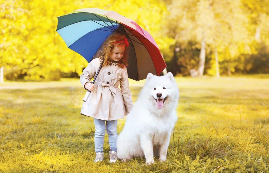 Девочка спасала собаку от дождя и покорила пользователей Сети. Посмотрите, какая милота – некоторые плакали! (ВИДЕО)