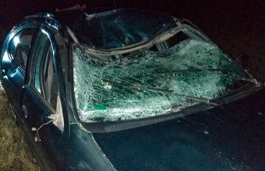 Лось спровоцировал ДТП в Шумилинском районе: пострадал водитель