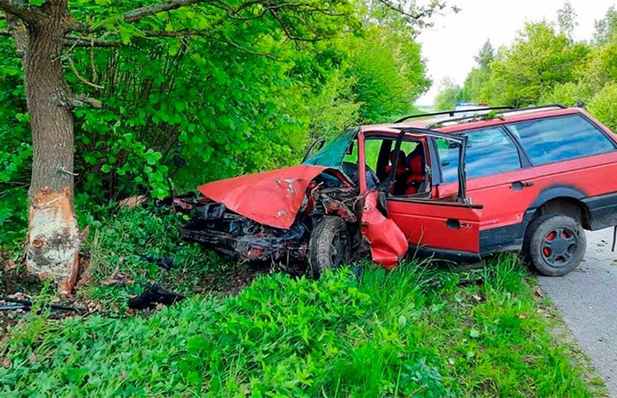 Легковушка врезалась в дерево в Полоцком районе – водитель погибла