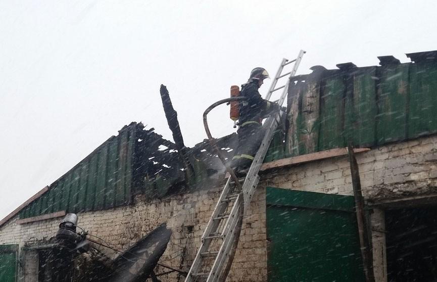 150 коров эвакуировано при пожаре на ферме в Браславском районе
