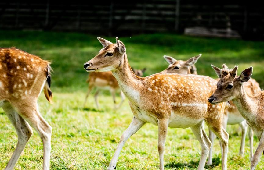 Красивая природа и уникальные трофеи. Узнали, почему иностранцы приезжают на охоту в Беларусь