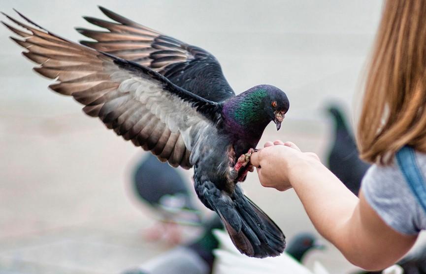 В Бангкоке за кормление голубей будут наказывать штрафом или тюремным заключением
