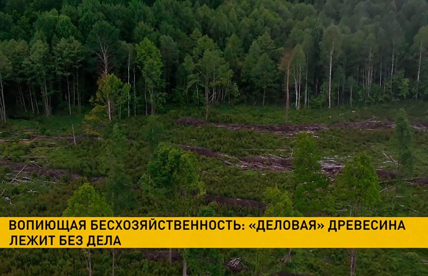 Вырубленная на продажу древесина осталась гнить в лесу. В причинах разбирается КГК