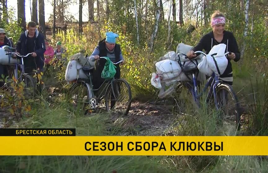 В поисках «красного золота»: зачем украинцы переходят через границу на белорусские Ольманские болота
