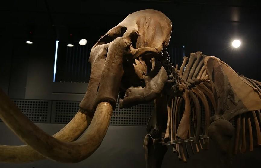 Ученые из США решили воссоздать мамонтов и заселить ими арктическую тундру