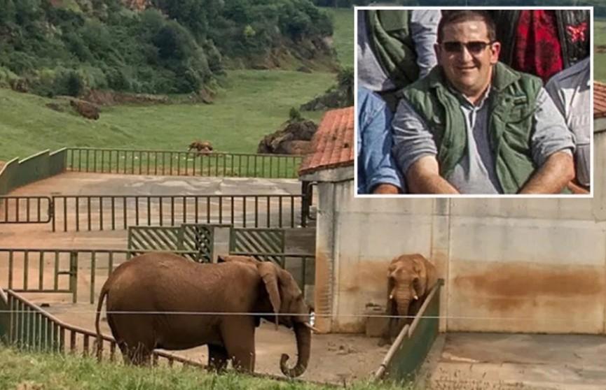 Слониха ударила хоботом опытного сотрудника сафари-парка и убила его