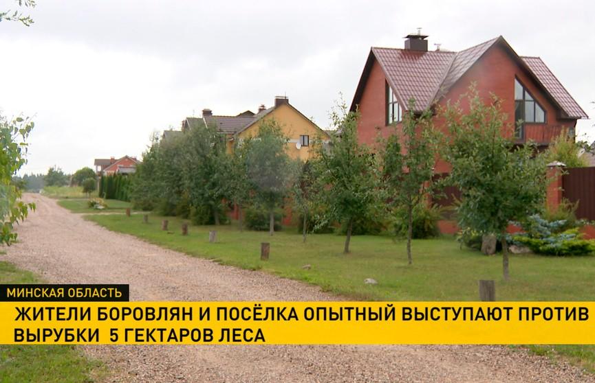 Жители Боровлян и посёлка Опытный пытаются спасти от вырубки пять гектаров леса