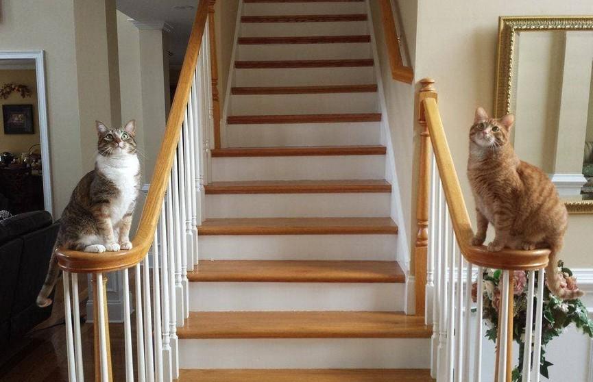 33 кота, которые идеально вписались в интерьер. Вы только посмотрите на этих пушистиков!