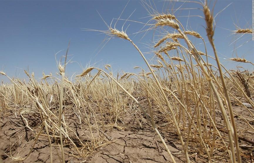 Засуха 2018 года привела к глобальному дефициту зерна