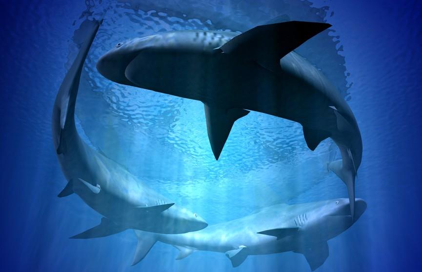 Мужчина на яхте выпил и прыгнул на спину проплывающей мимо акулы – пользователи Сети разозлились! (ВИДЕО)