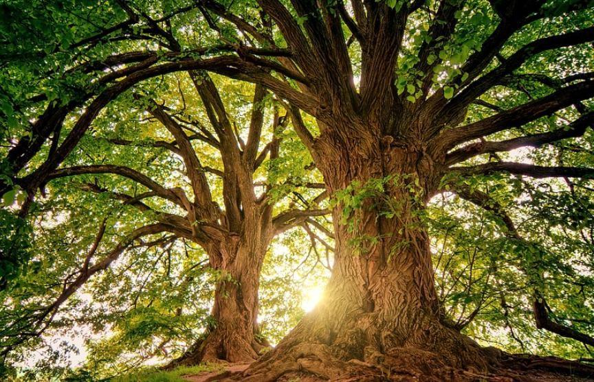 Городские леса планируют высаживать в Великобритании