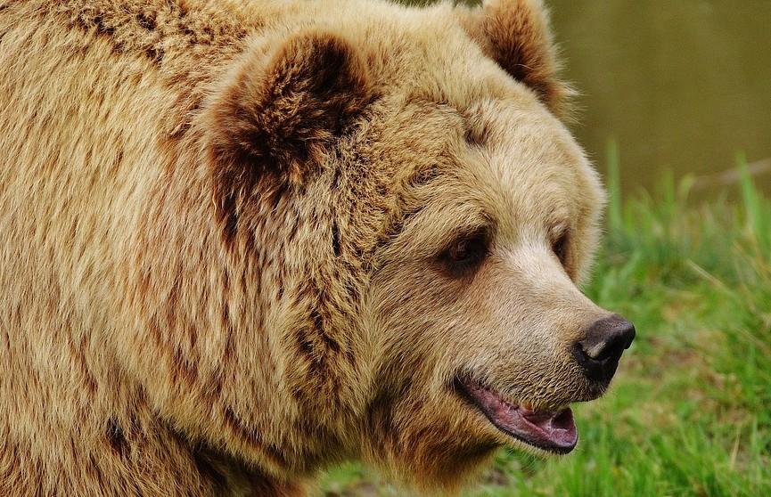 Медведь вытащил женщину из палатки и растерзал ее