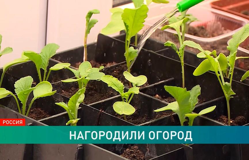 Городские огороды. Приживется ли мировой тренд в Беларуси?