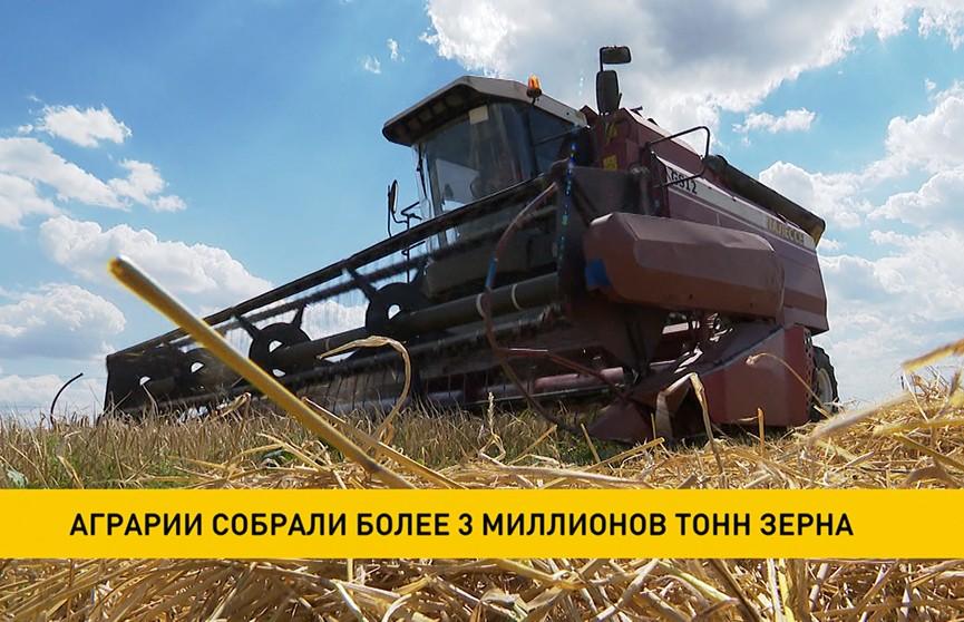 Аграрии собрали более 3 миллионов тонн зерна