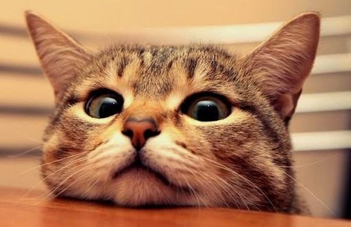 Кошка помешала полицейскому составить протокол и взорвала Сеть