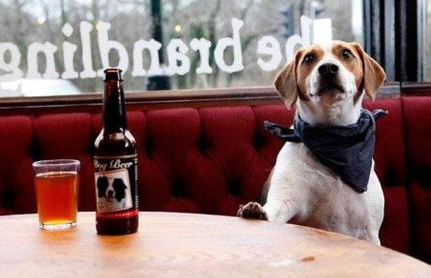 Безалкогольное пиво для собак начали выпускать в США