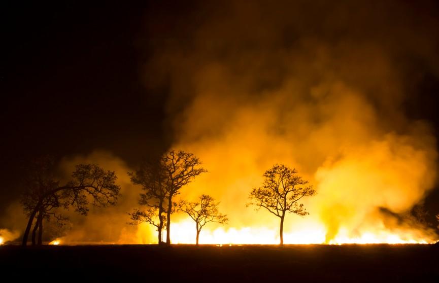 Горят леса в Беларуси: растет ли статистика и каковы причины