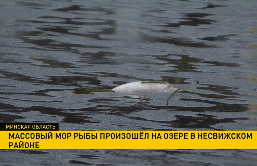 Массовый мор рыбы произошёл на озере в Несвижском районе