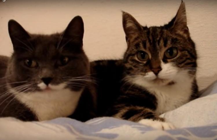Увлекательный разговор двух котов попал на видео. Только посмотрите на этих очаровашек!