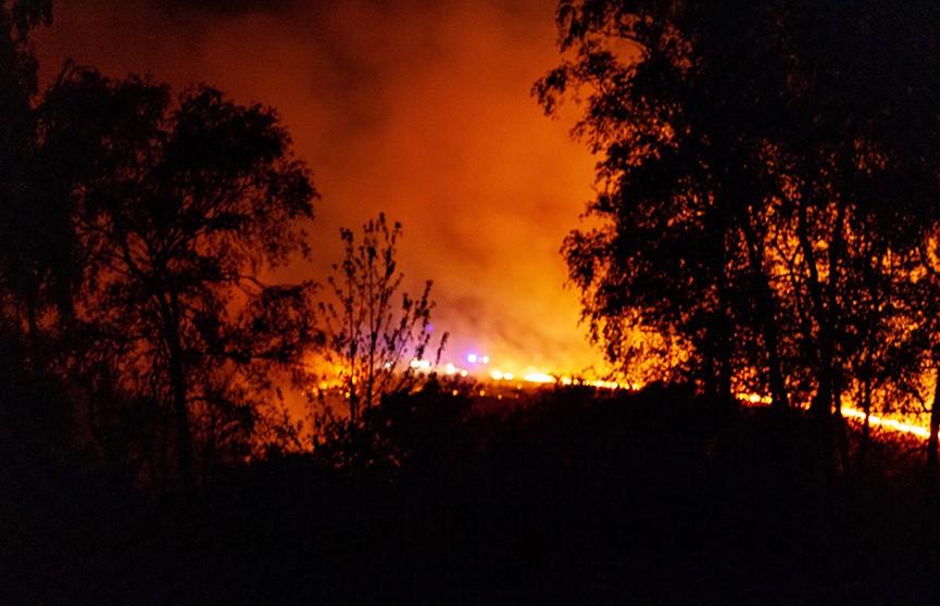 Лес Винни-Пуха загорелся в Англии
