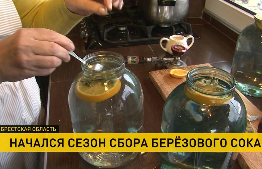 Сезон сбора берёзового сока в Брестской области начался на две недели раньше обычного